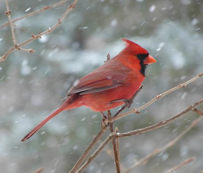 bird-94957_1280